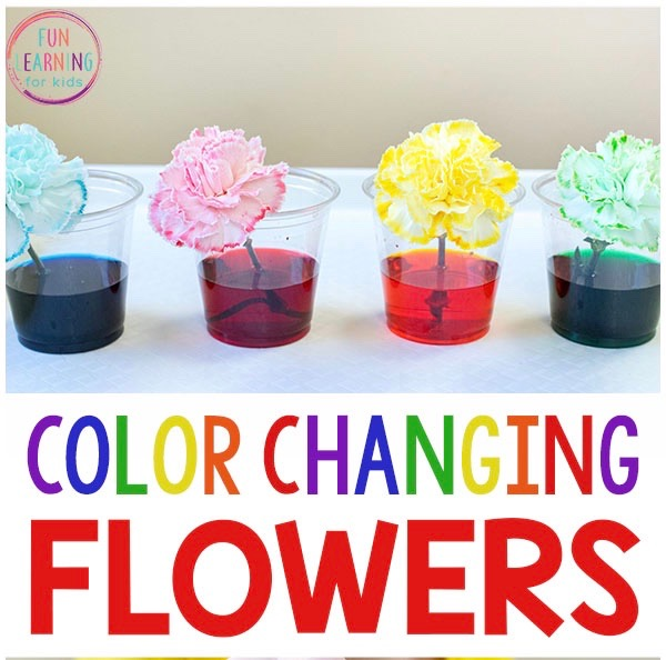 Capillary Action - How this works and worksheets are included