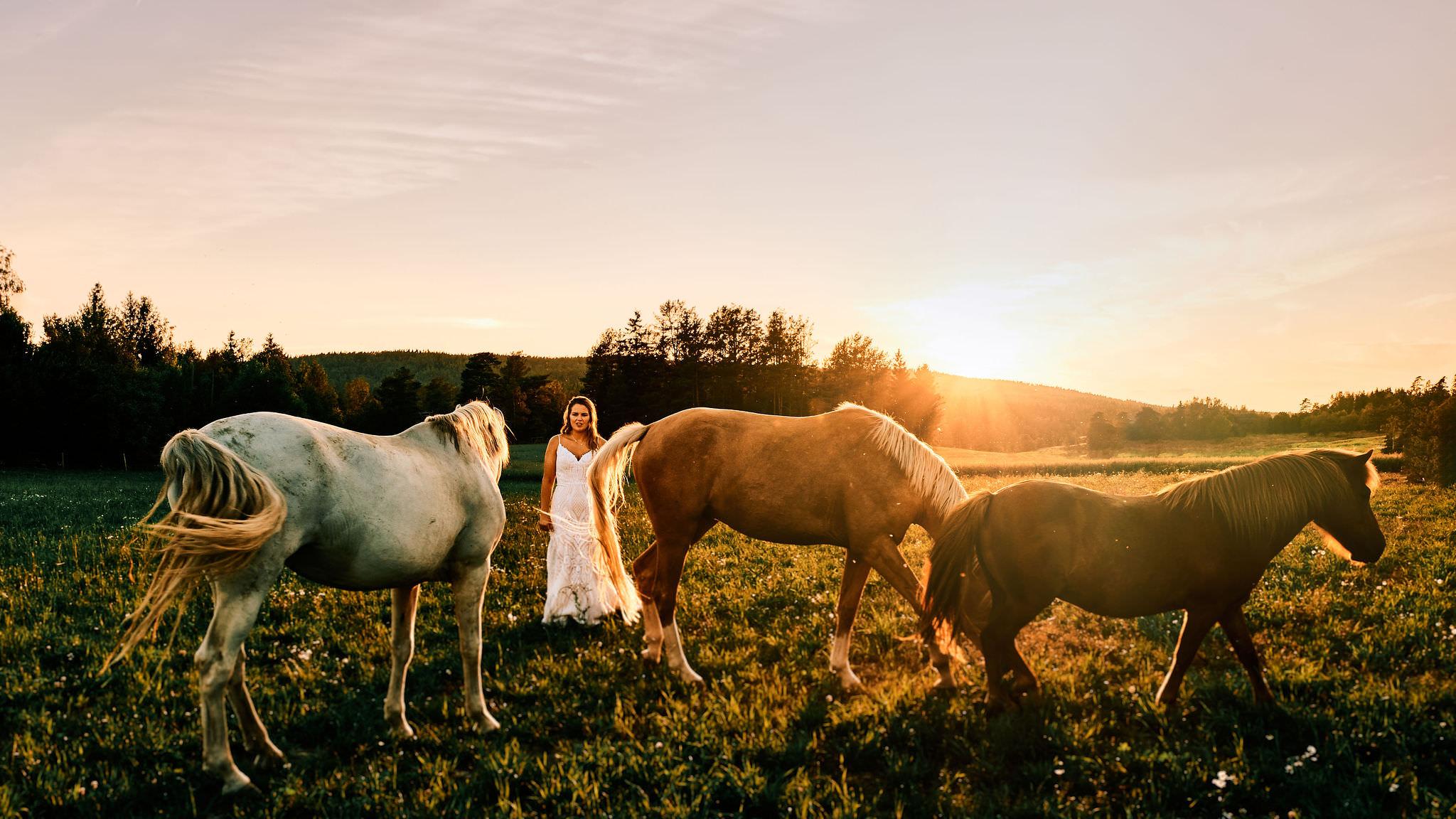 Jeanette og hestene i solnedgangen