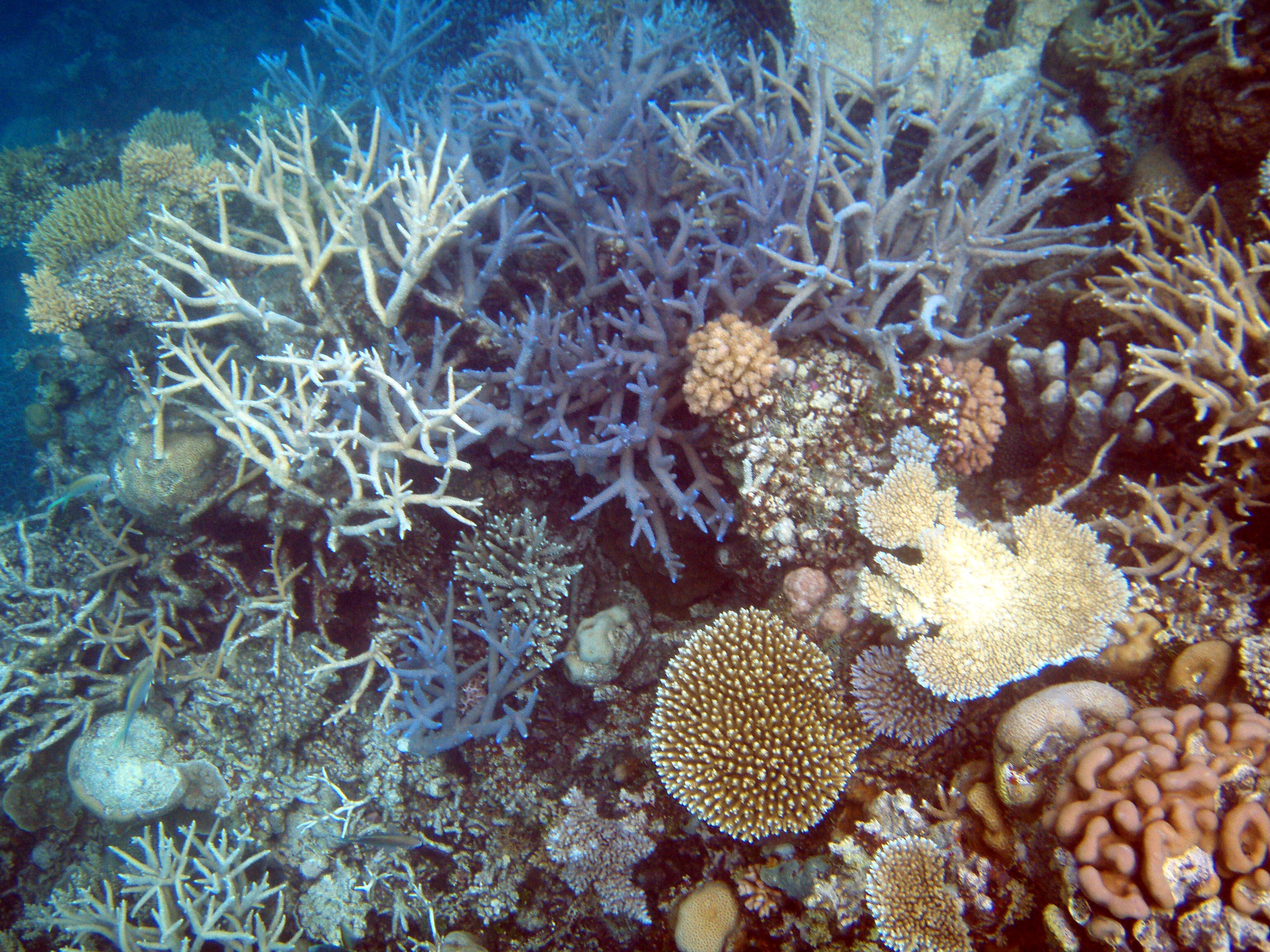 In vitro fertilization to save Great Barrier Reef and other coral reefs