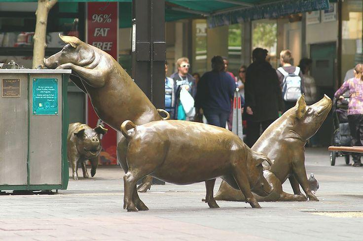 Rundle Mall Pigs, Aukland Australia