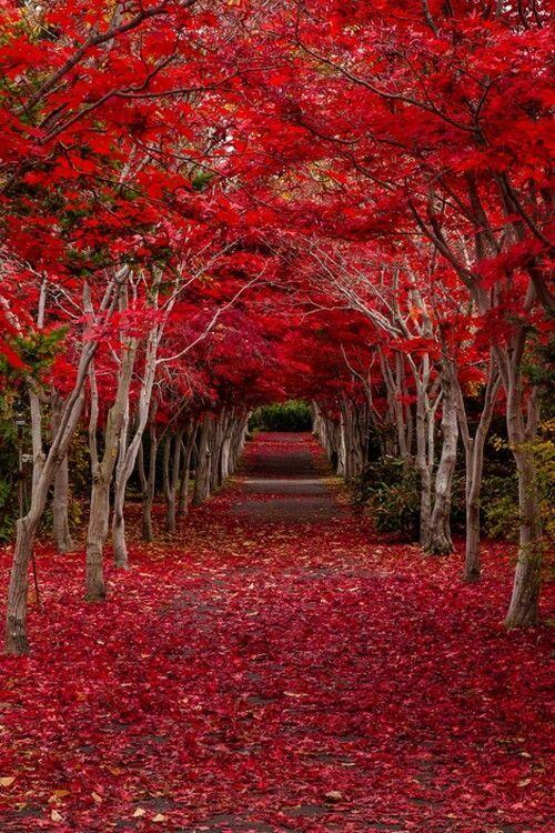 Crimson Forest - Hokkaido Japan