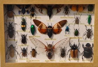 Moths-bugs1.jpg