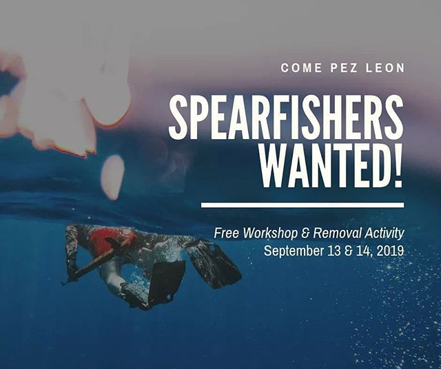 Volunteer opportunity for our fishers! Looking for 10 scuba divers or freedivers to join us in September for a lionfish removal at the Tres Palmas Marine Reserve! See the post on our Facebook for the link to register! #lionfish #puertorico #letsdosomescience #coralreefs #scuba #freediving #spearfishing