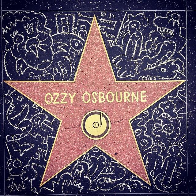 Chalk on Ozzy.jpg