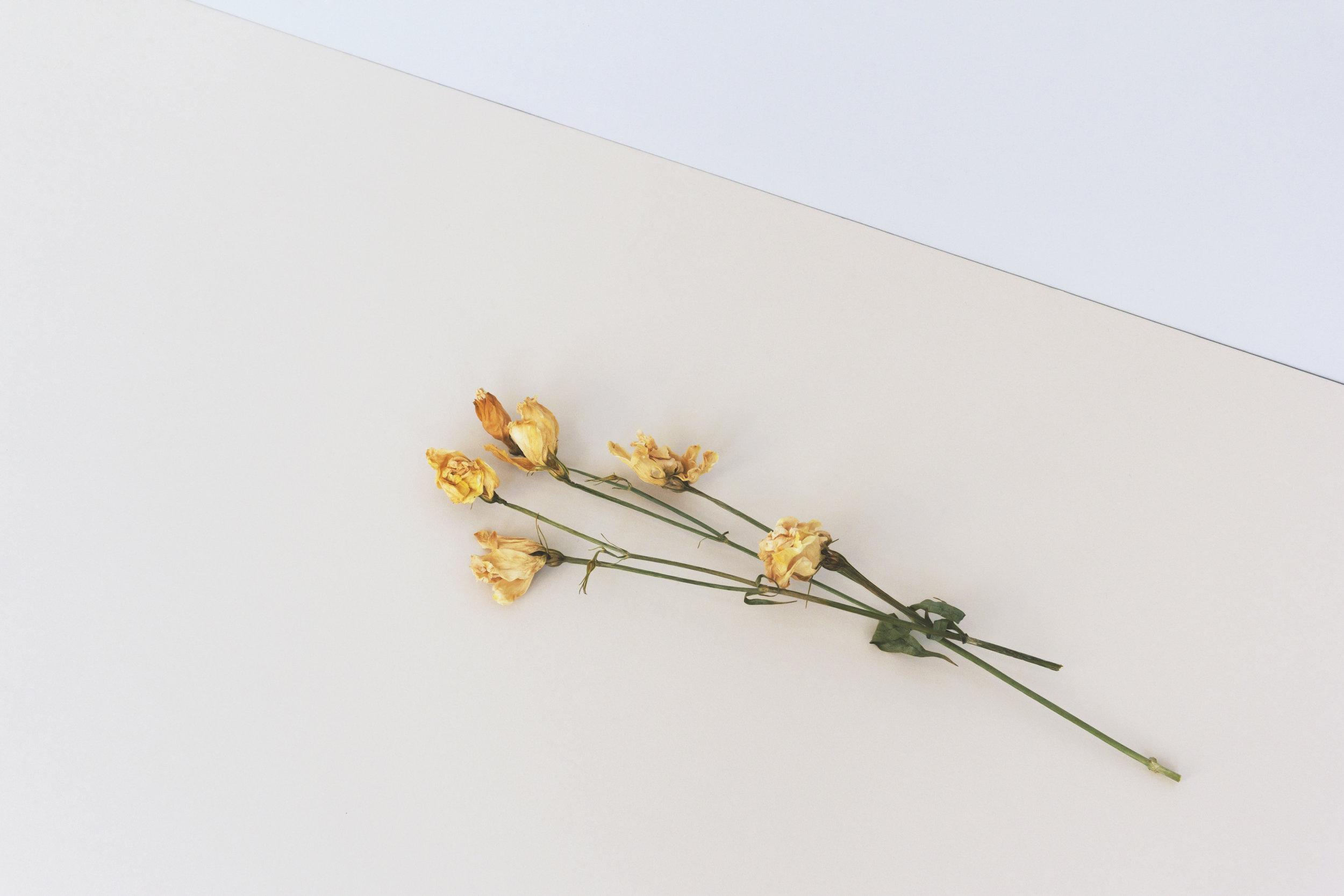flowers-artwork.jpg