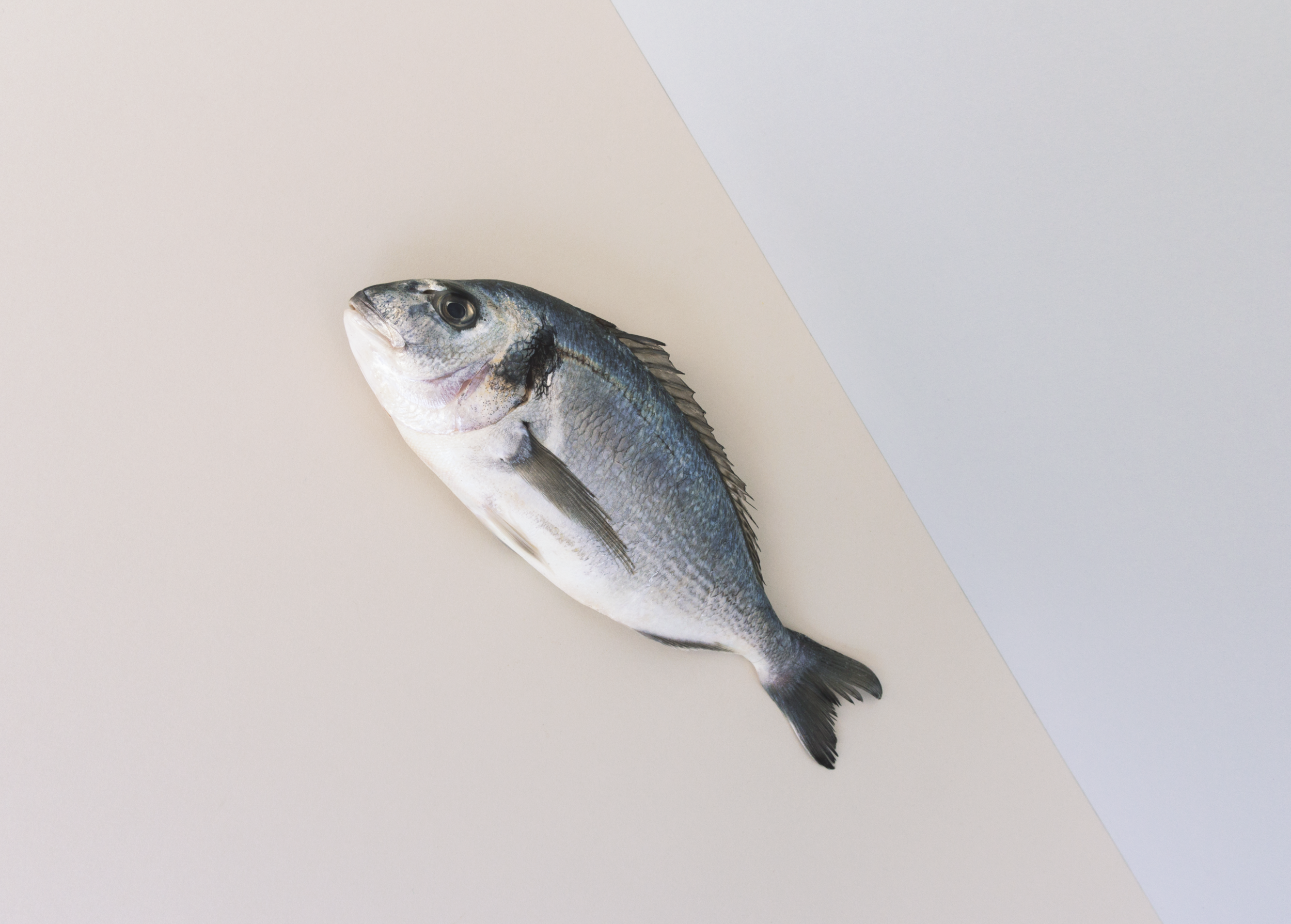 fish-charlotte-fosdike.jpg