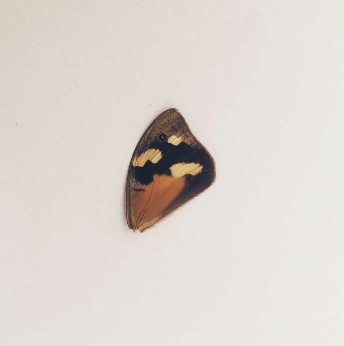 butterfly-wing.jpg