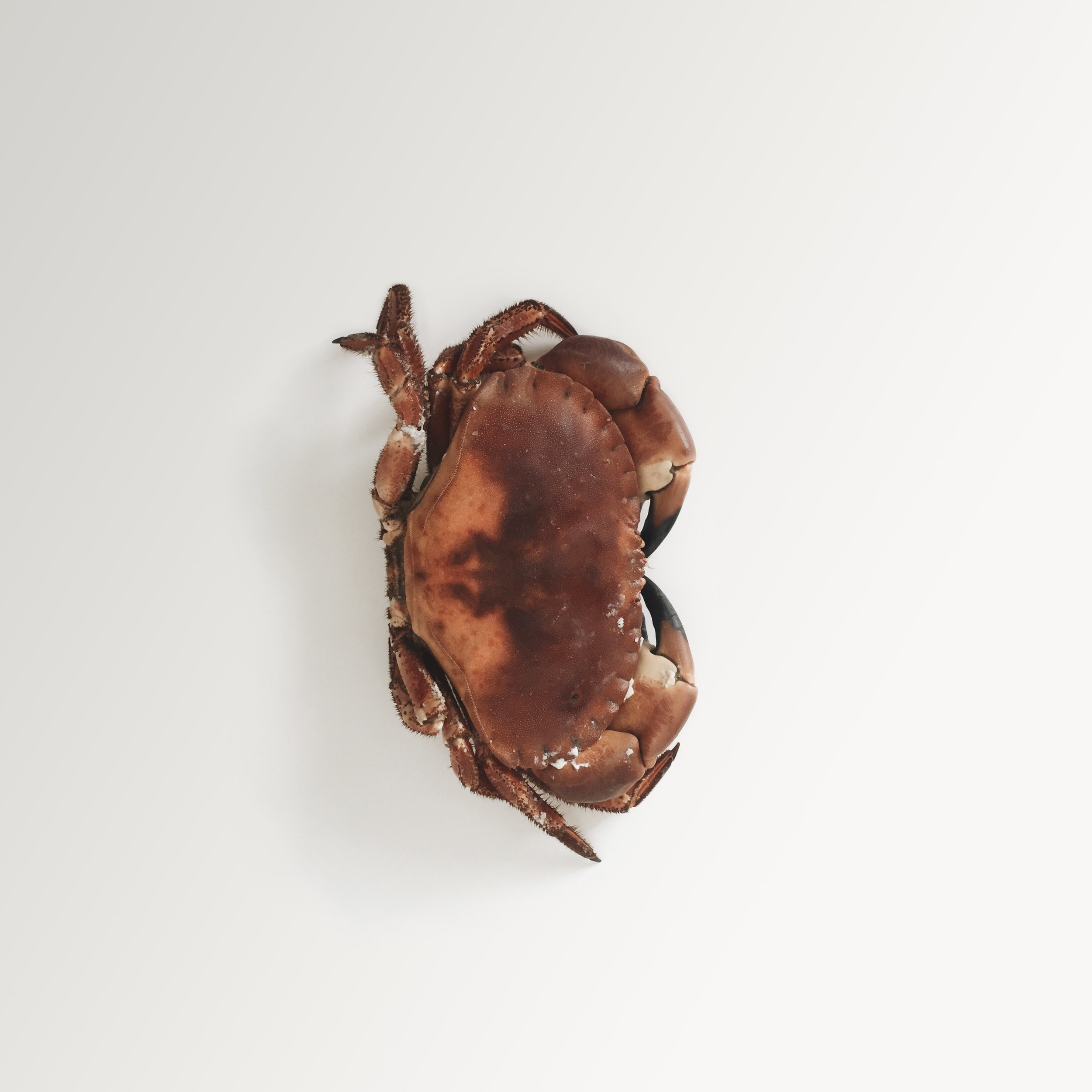 A simple, minimalist, contemporary, fine art photograph of a crab