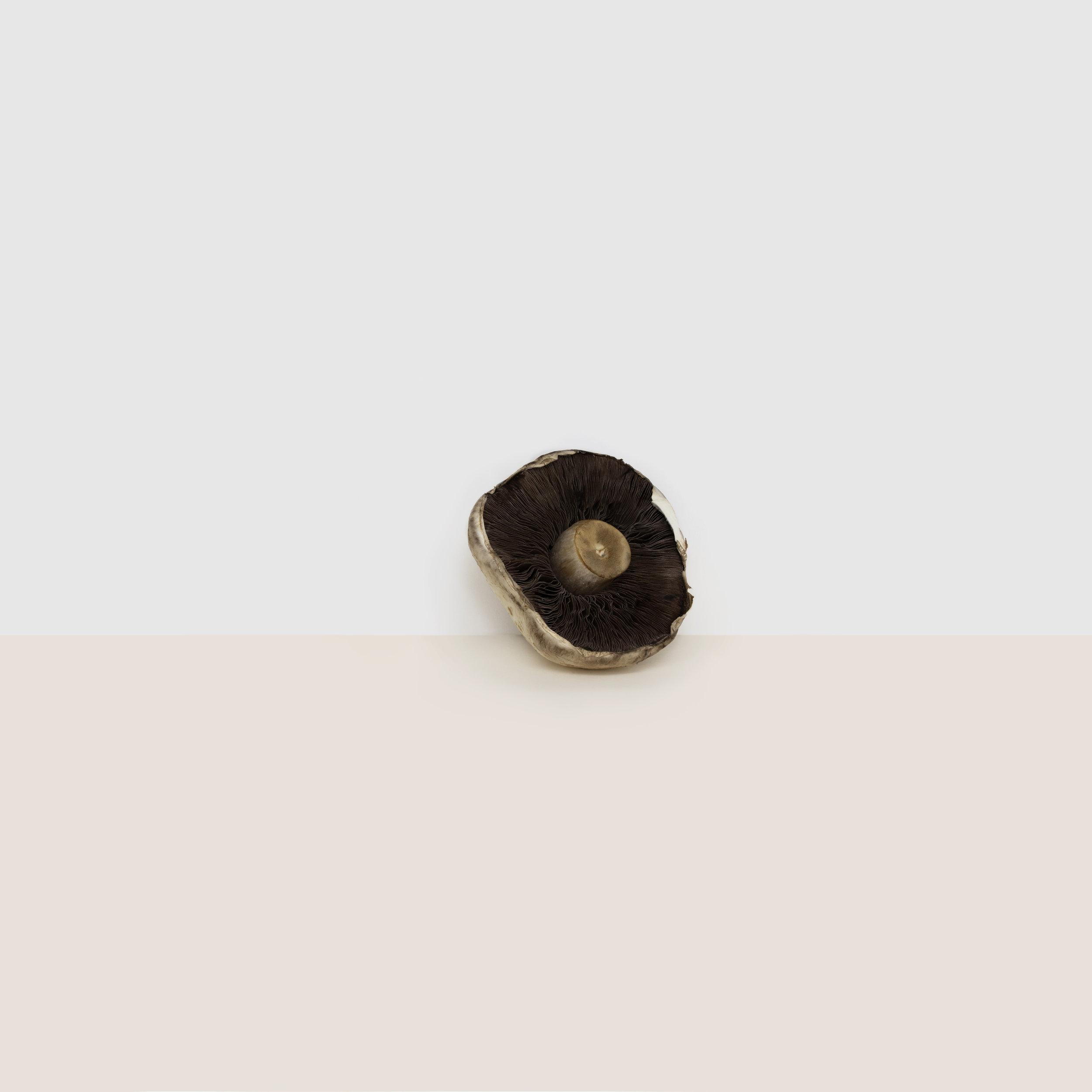 A simple, minimalist, contemporary, fine art photograph of a mushroom