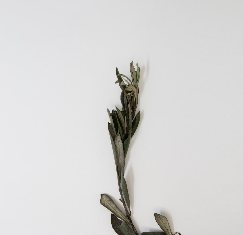 Olive-Leaves-CFosdike.jpg