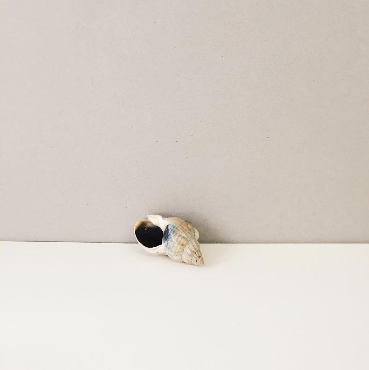 minimalist-shell-photograph.png