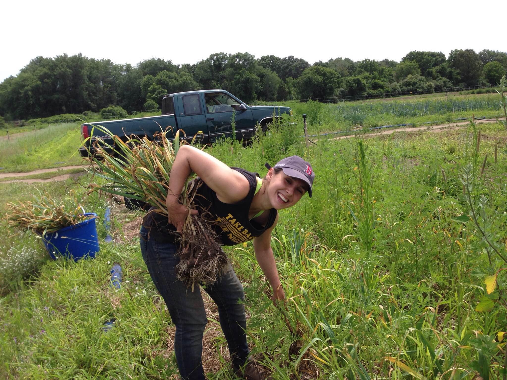 Lauren pulls garlic from the field