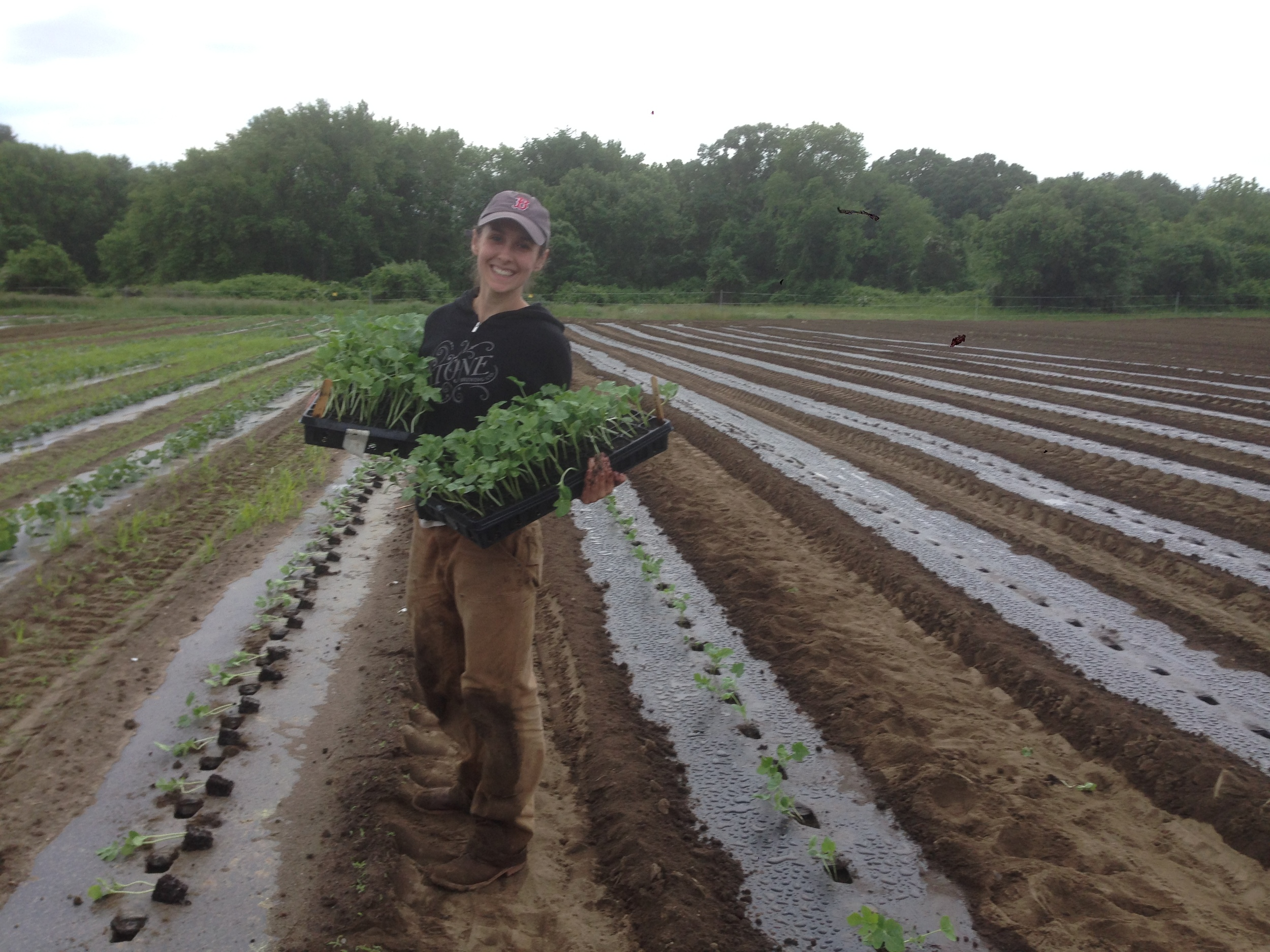 Lauren planting watermelon on Saturday
