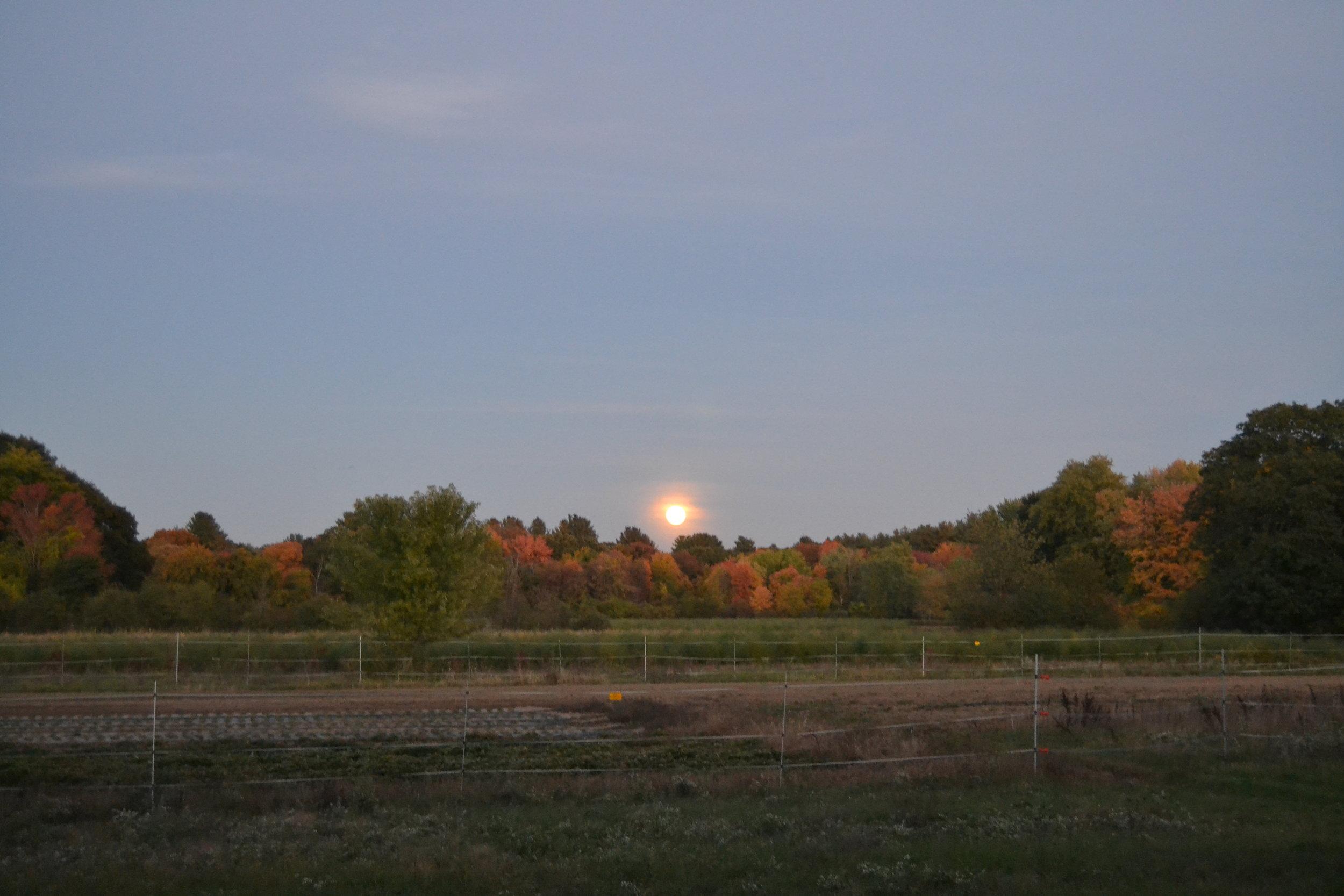 Moonrise over the farm on Saturday.