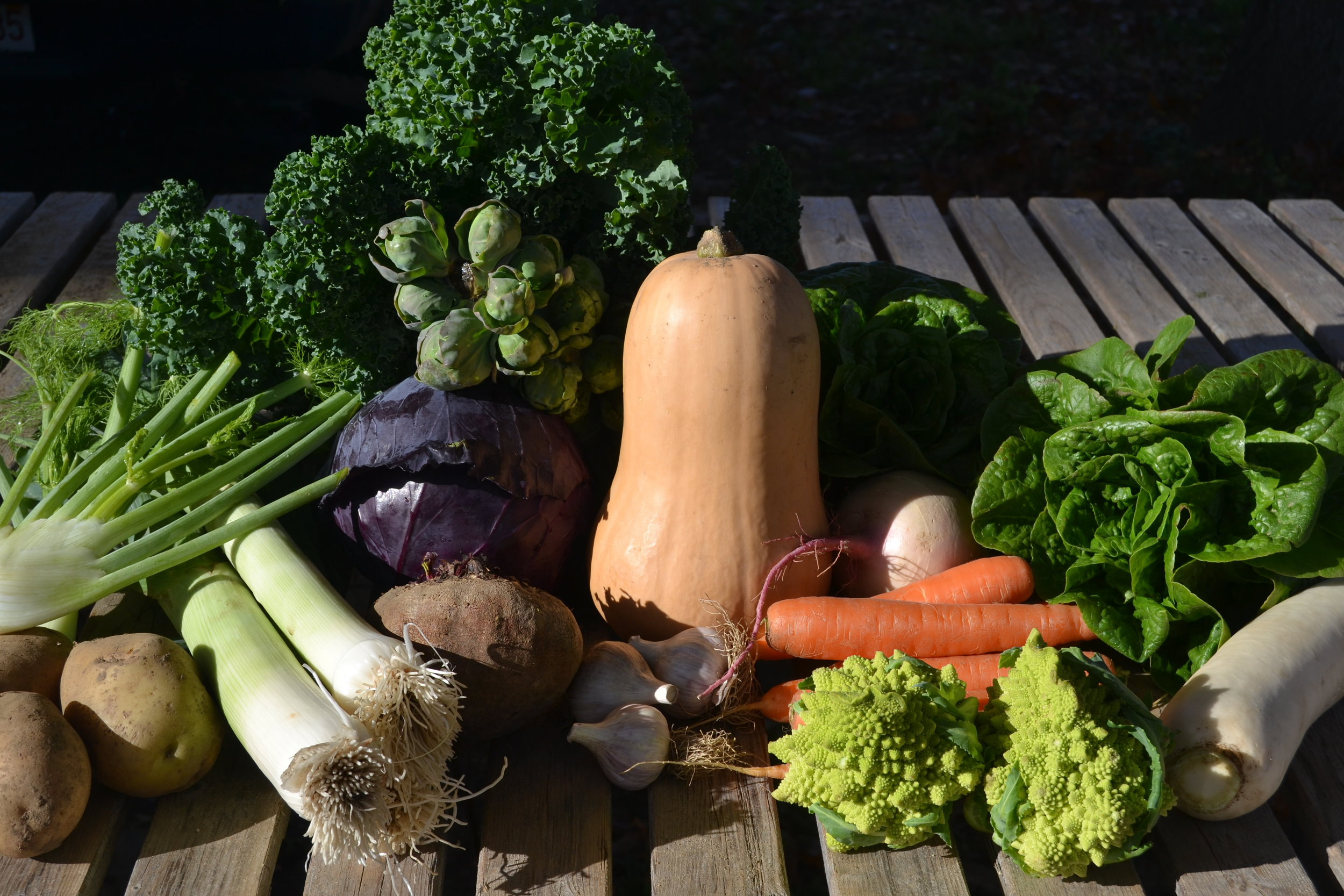 A sampling of the variety of vegetables in the November CSA.