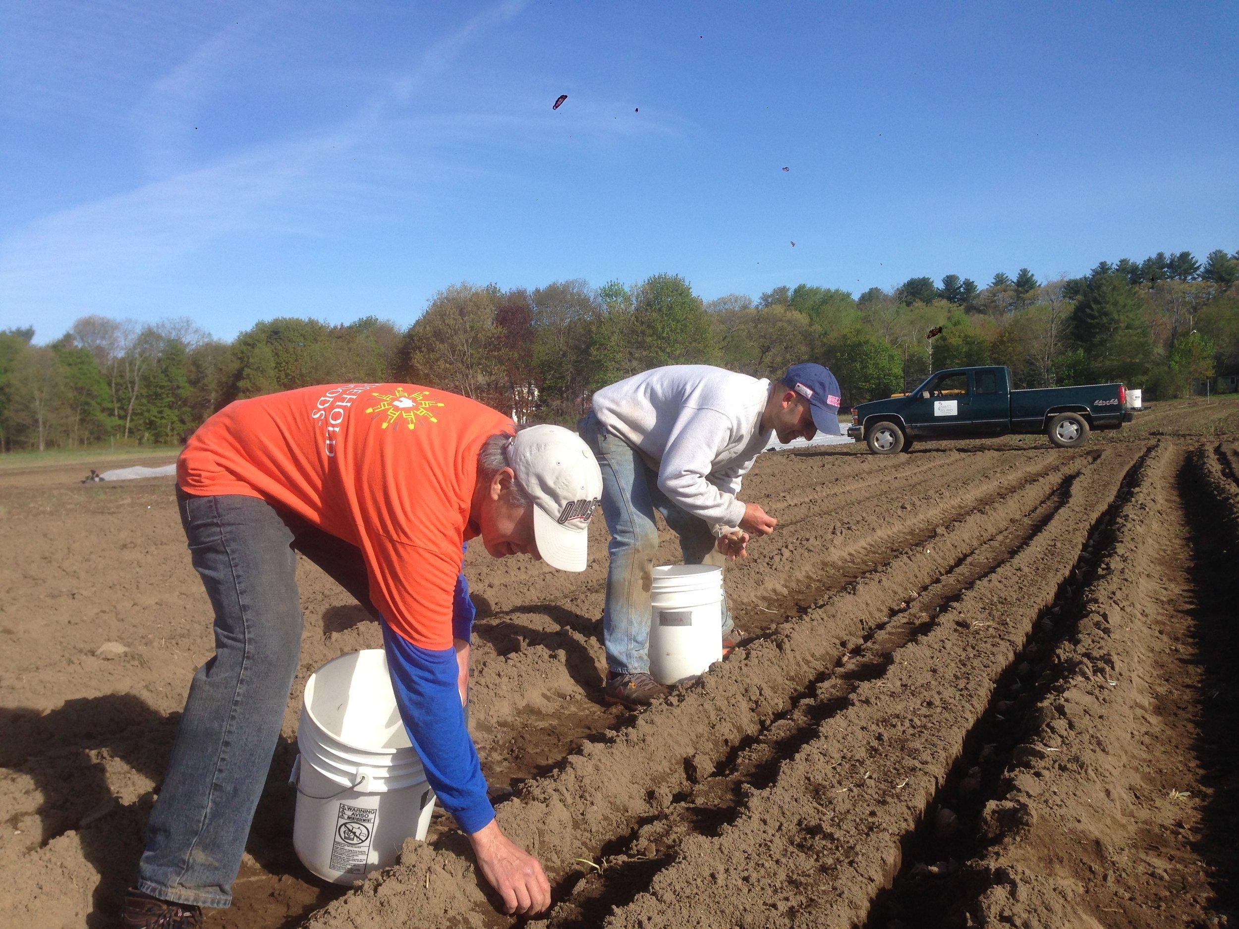 Dave and Shaun planting potatoes