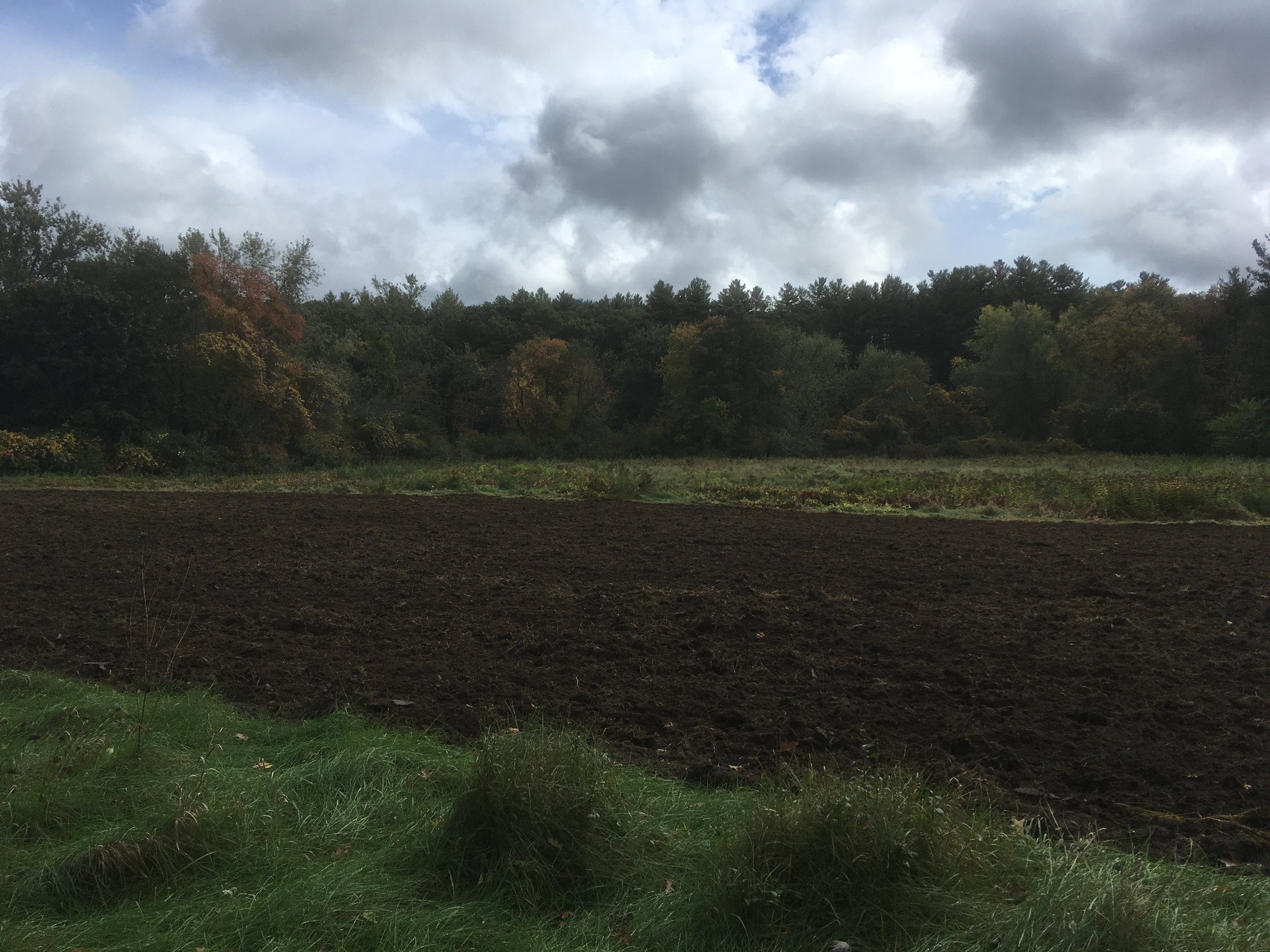 Last week, we finally had time to plow and seed cover crop at the South Corey Meadow on Barrett's Mill Road. We are so excited to start growing in this beautiful spot in future seasons!