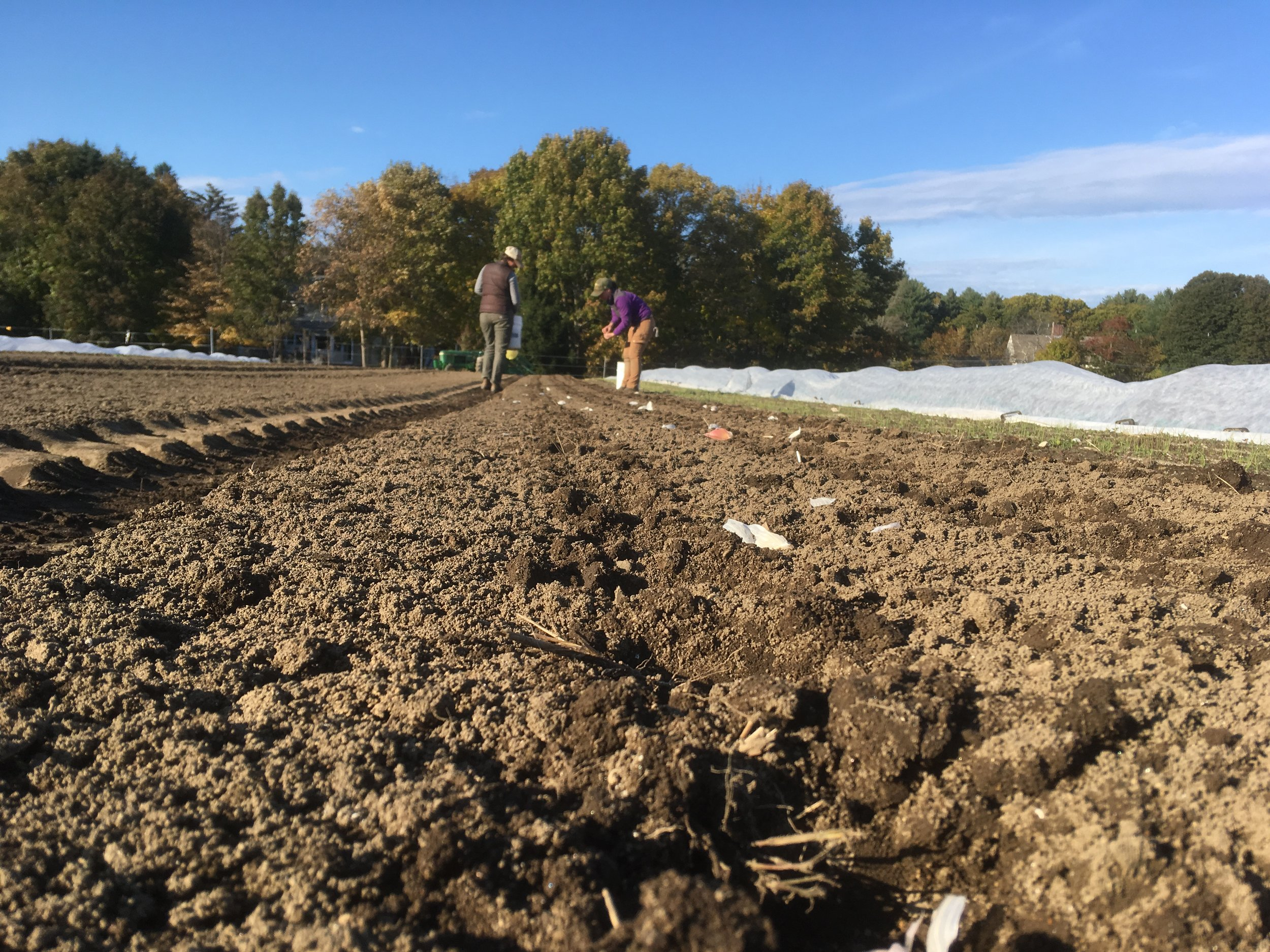 Janel and Katherine plant garlic last week.