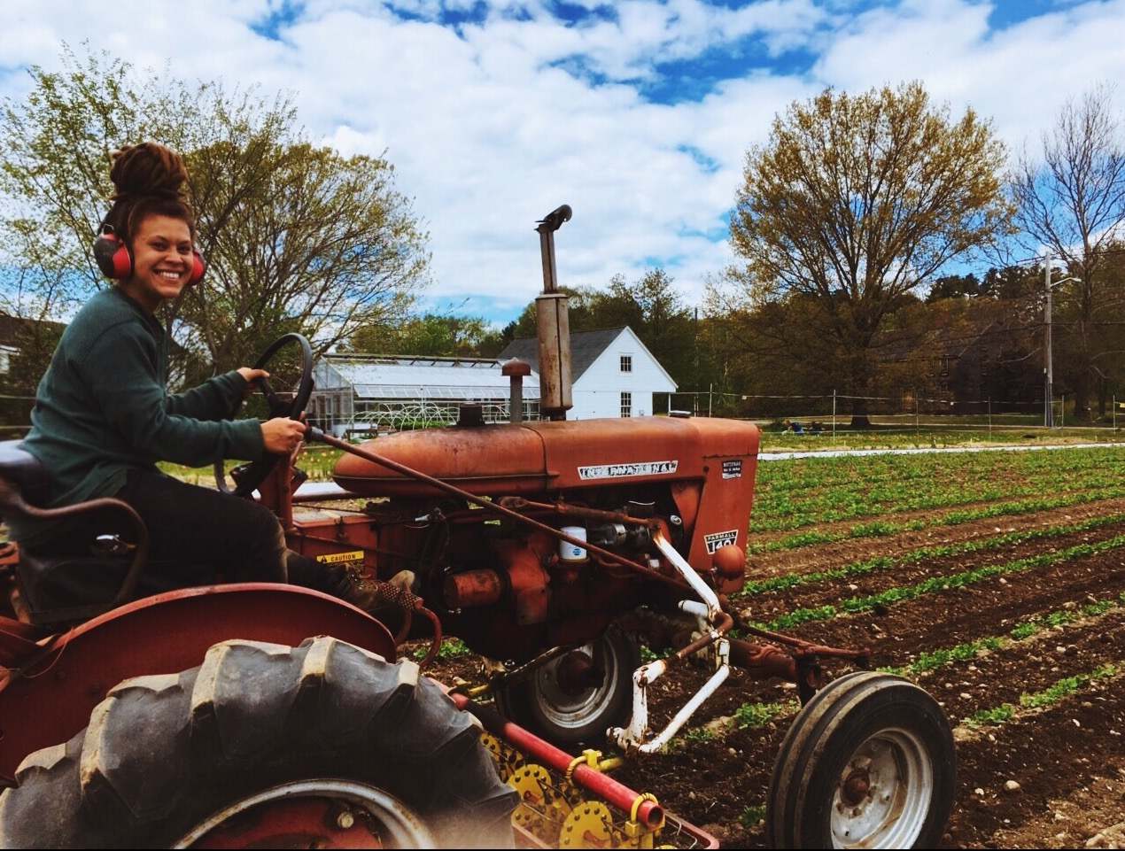 Sarah on our Farmall 140 using the Buddingh basket weeder to cultivate the sugar snap peas!