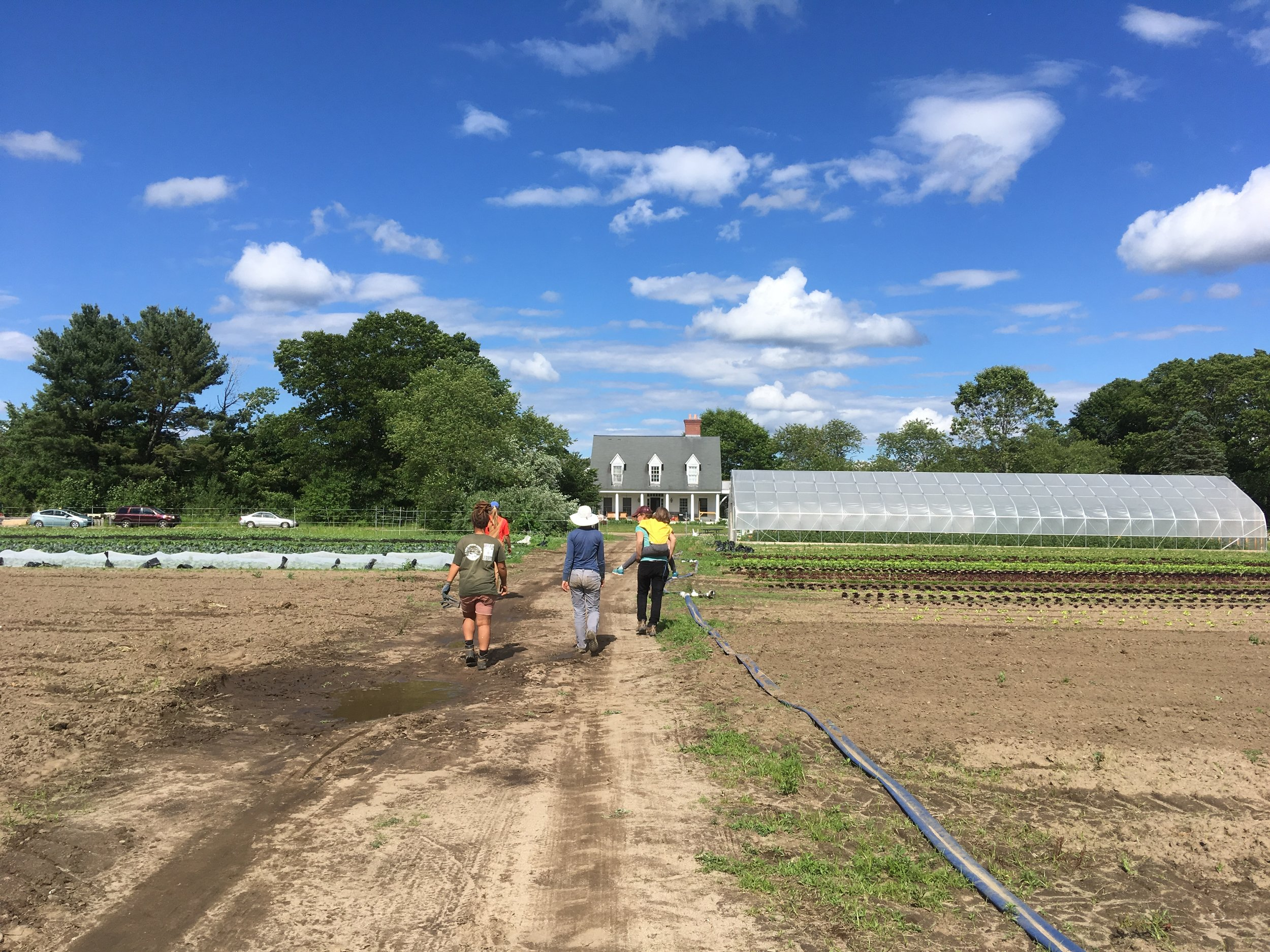 Heading out of the field Friday afternoon after finishing weeding onions (with a little help from a junior buddy!)