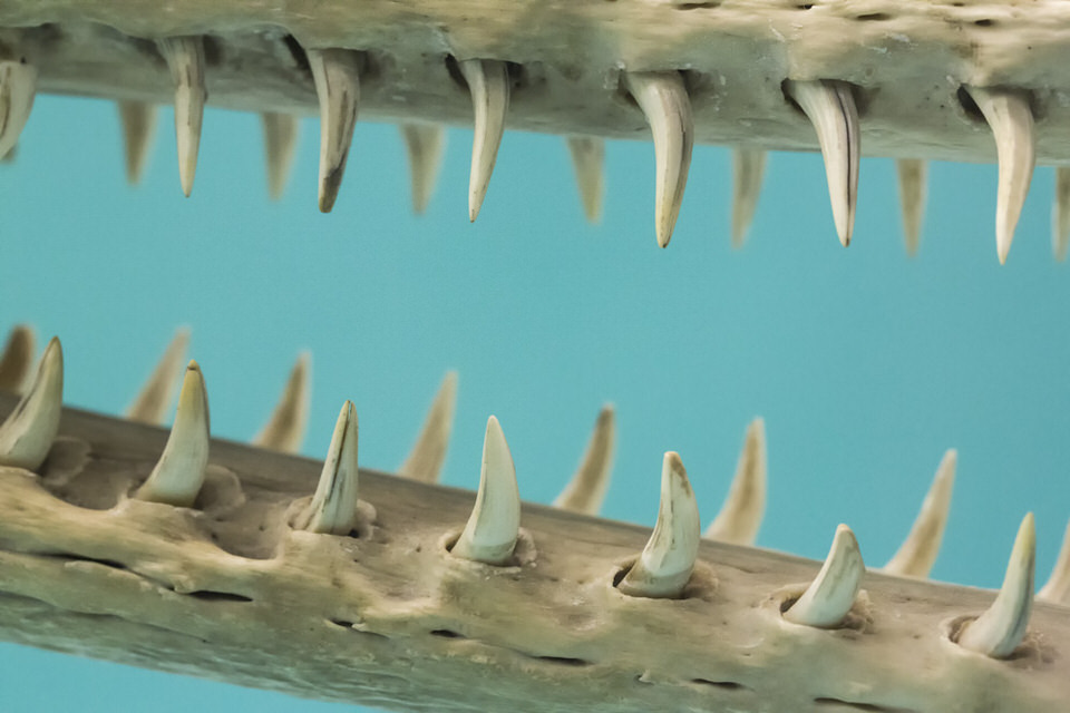 croc teeth Wash dc.jpg