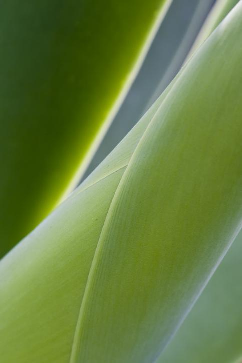 leaf wrap for website.jpg