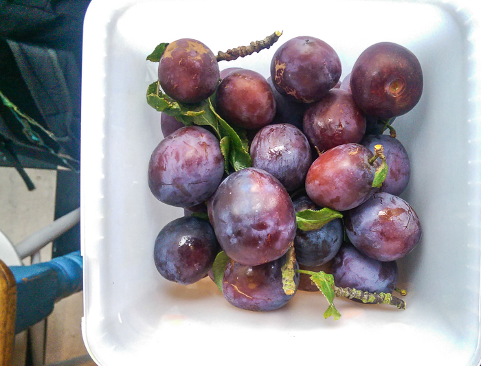 Victoria plums from Rosie's allotment