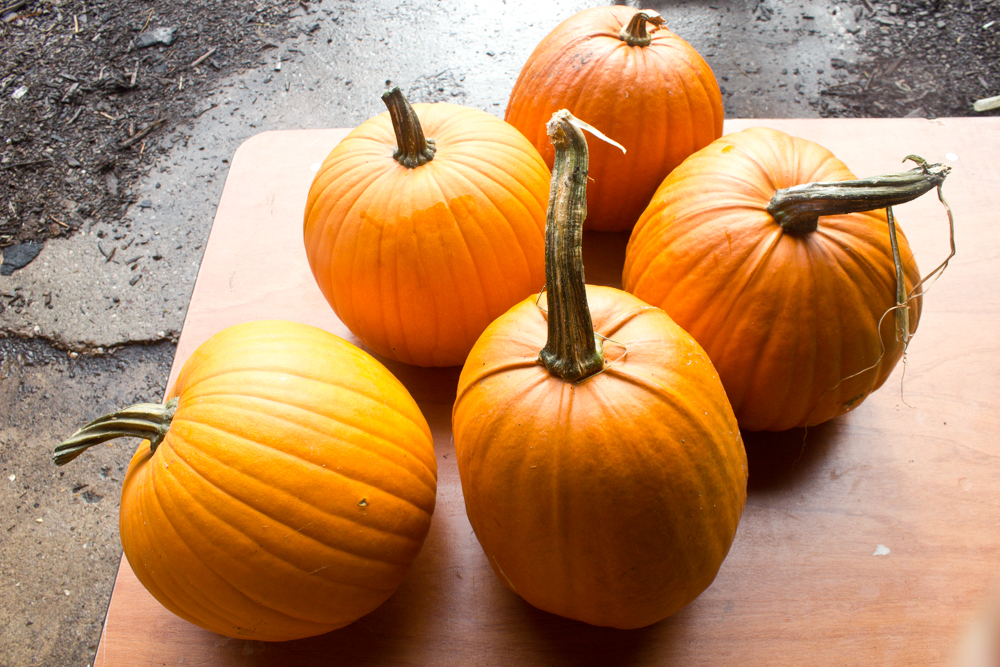 Pumpkins for roasting