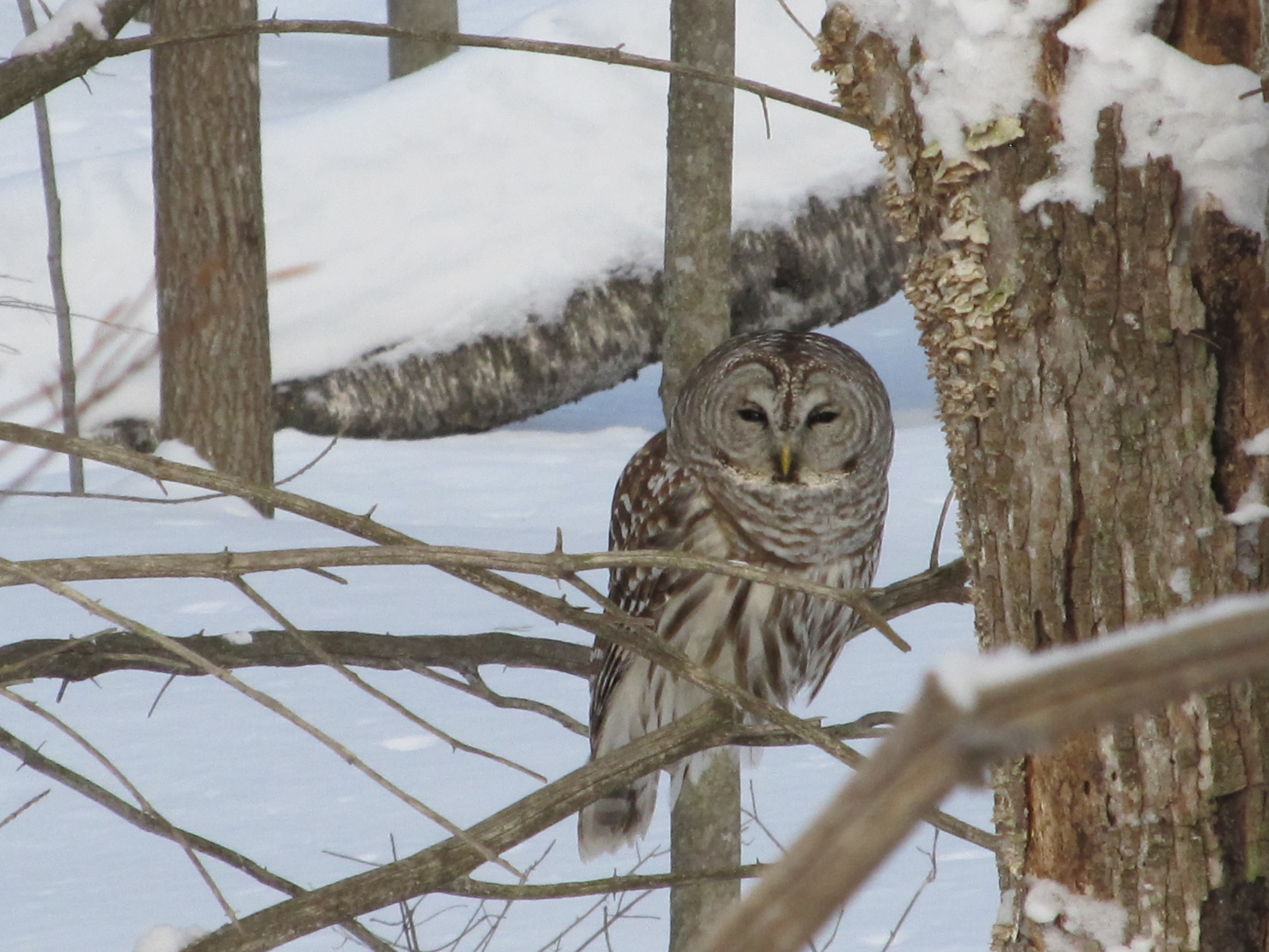 Owl out back