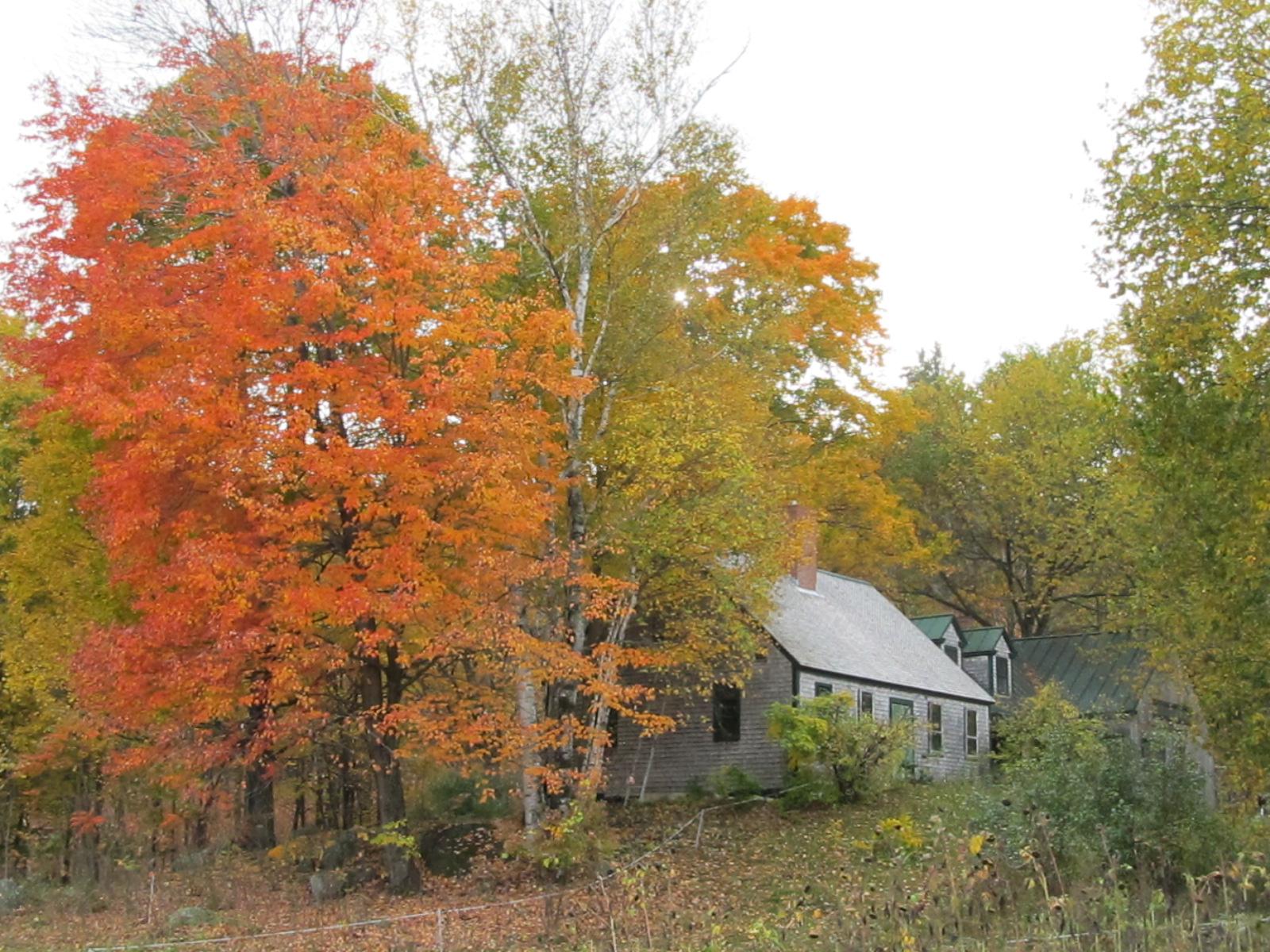 Fall-colored farm house