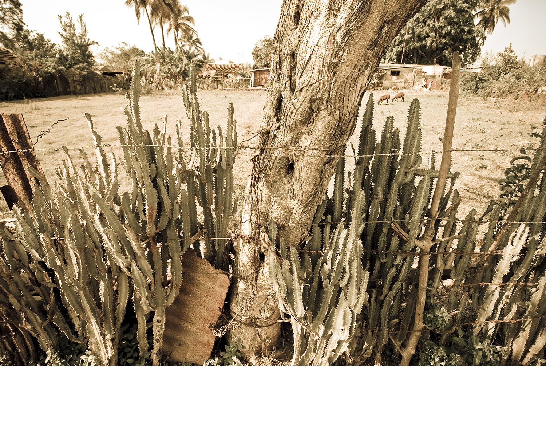 Cuba_cactus.jpg