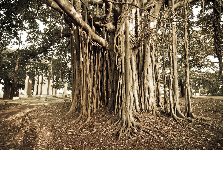 Cuba_tree.jpg