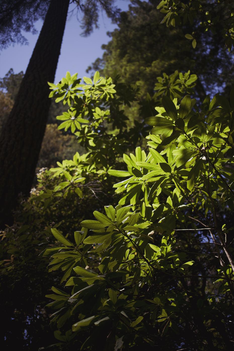 redwoods_08.JPG