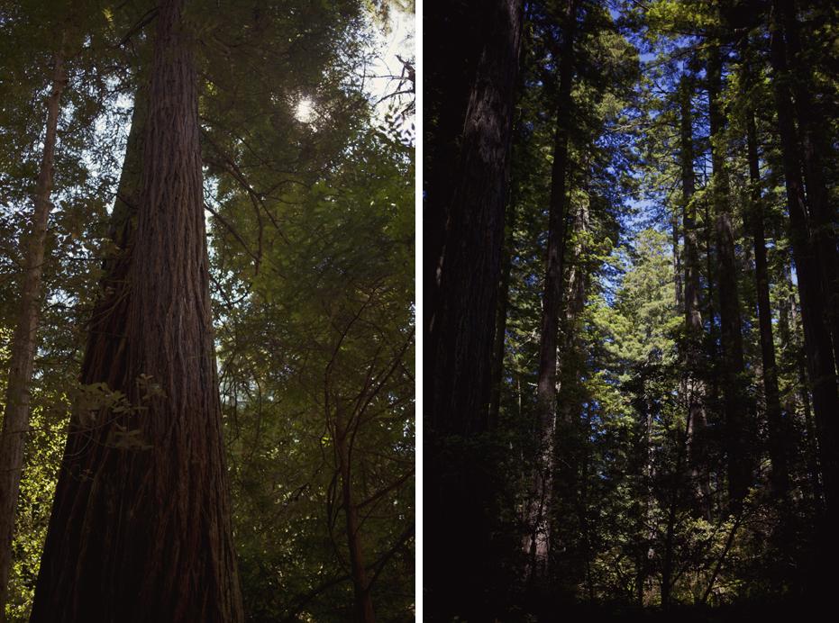 redwoods_04.jpg
