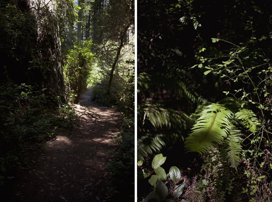 redwoods_06.jpg
