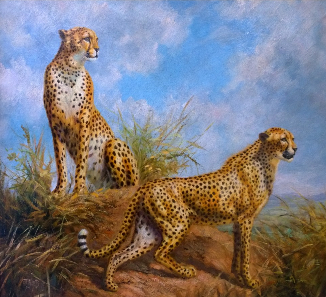 cheetahs.jpg