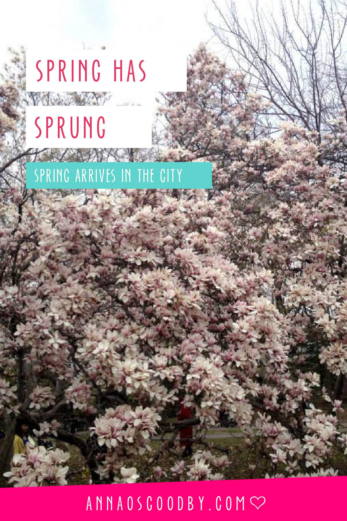 Anna Osgoodby Life + Design :: Spring has Sprung