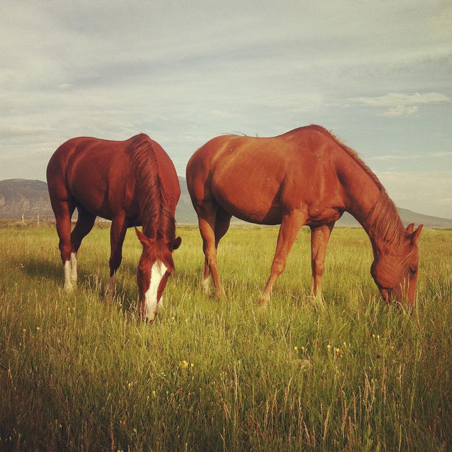 HorsesOfTheMedano_Instagram_3.JPG