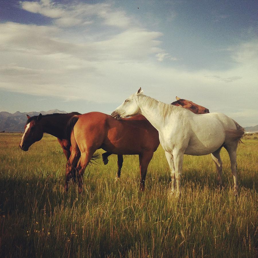 HorsesOfTheMedano_Instagram_1.JPG