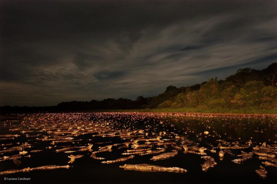 Caiman night, Luciano Candisani (Brazil)