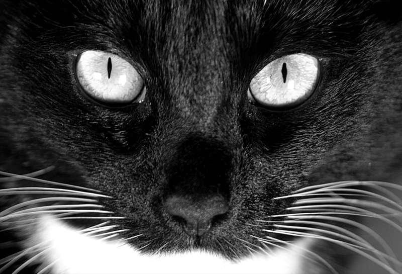 Black cat in close-up (photo by Haje)