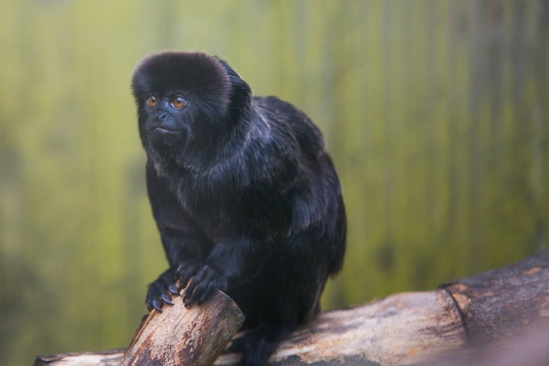 Okay, so it's a monkey. But it's a black monkey on a green background. You get the picture. (Photo by Haje.)