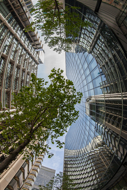 Steel, glass, and concrete, versus the rise of the young saplings