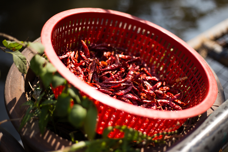 Chilis drying in the sun at 100% quality