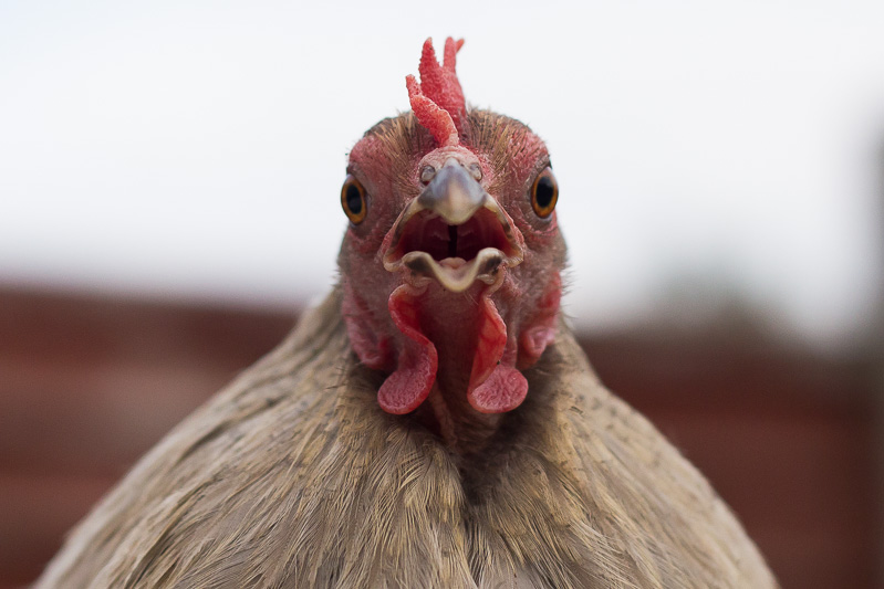 Do not perform a chicken impression! Tuck your elbows into your sides and control your breathing.