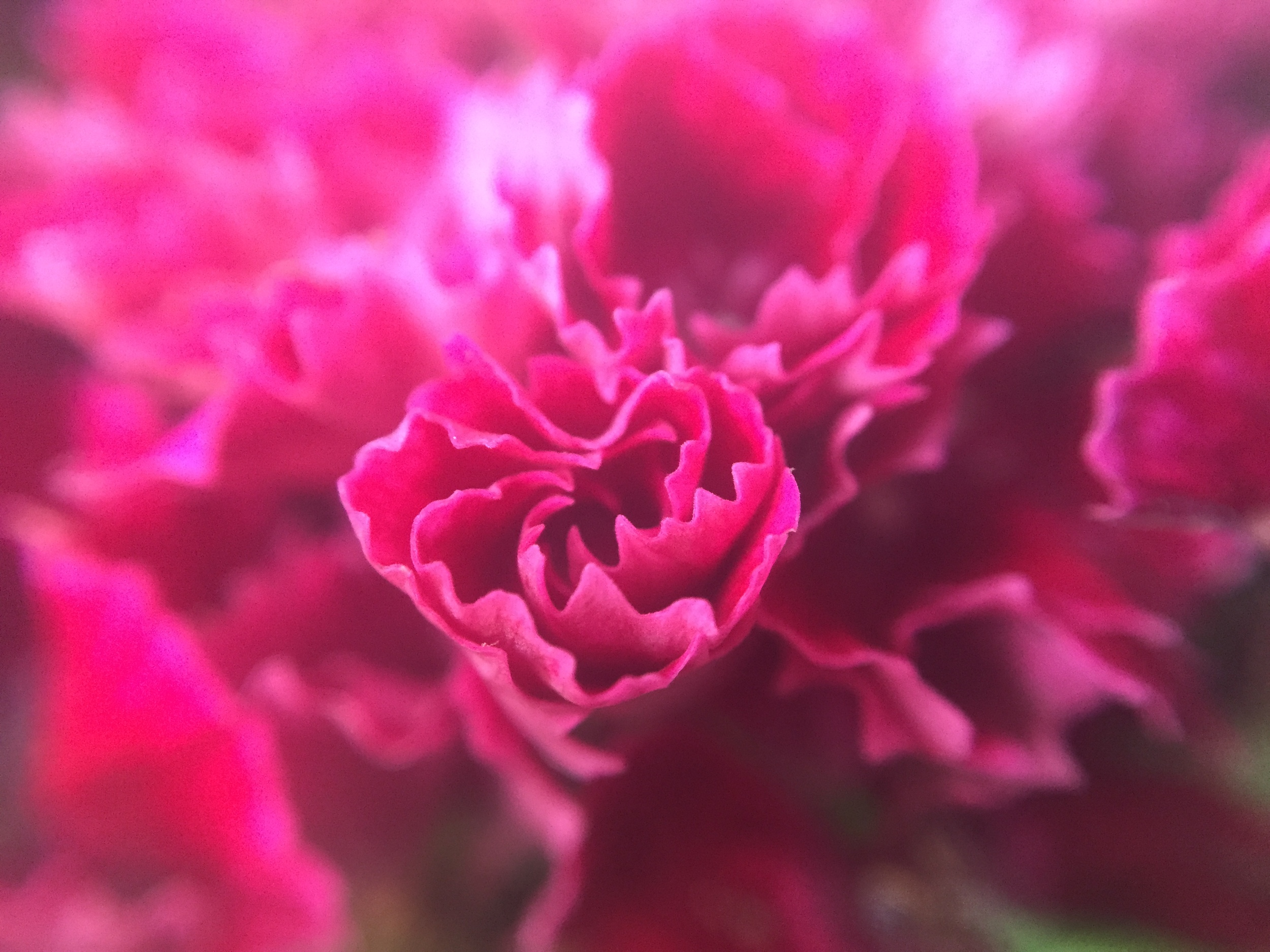 iPhone 6 with the Easy Macro band. Also unedited.