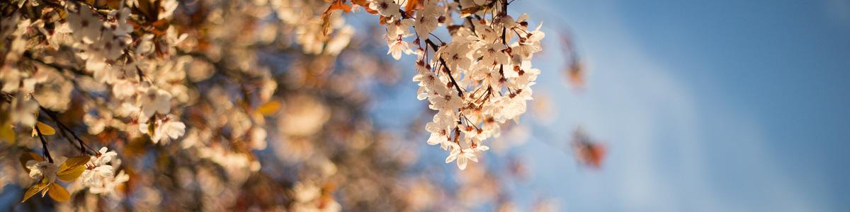 Blossom header.jpg