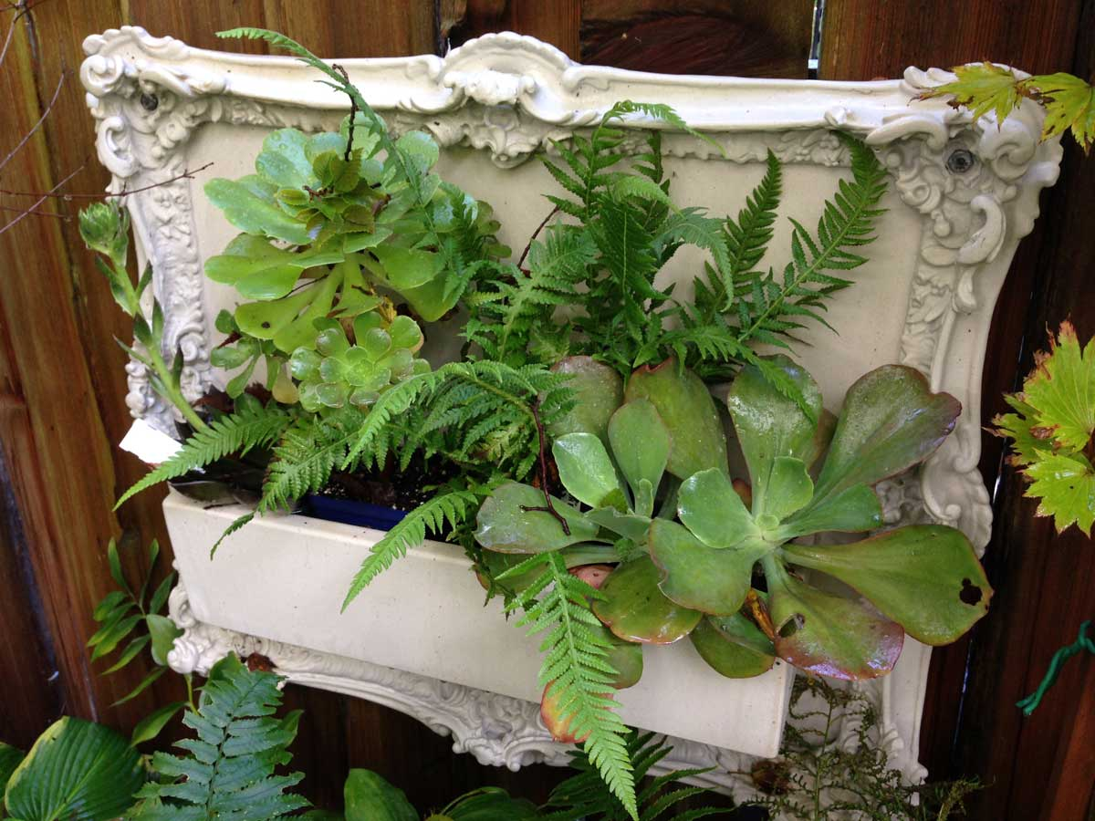 Landscape Furnishings offer our Fort Street frame as a living wall unit. this ornate concrete frame is a beautiful backdrop for plantings.