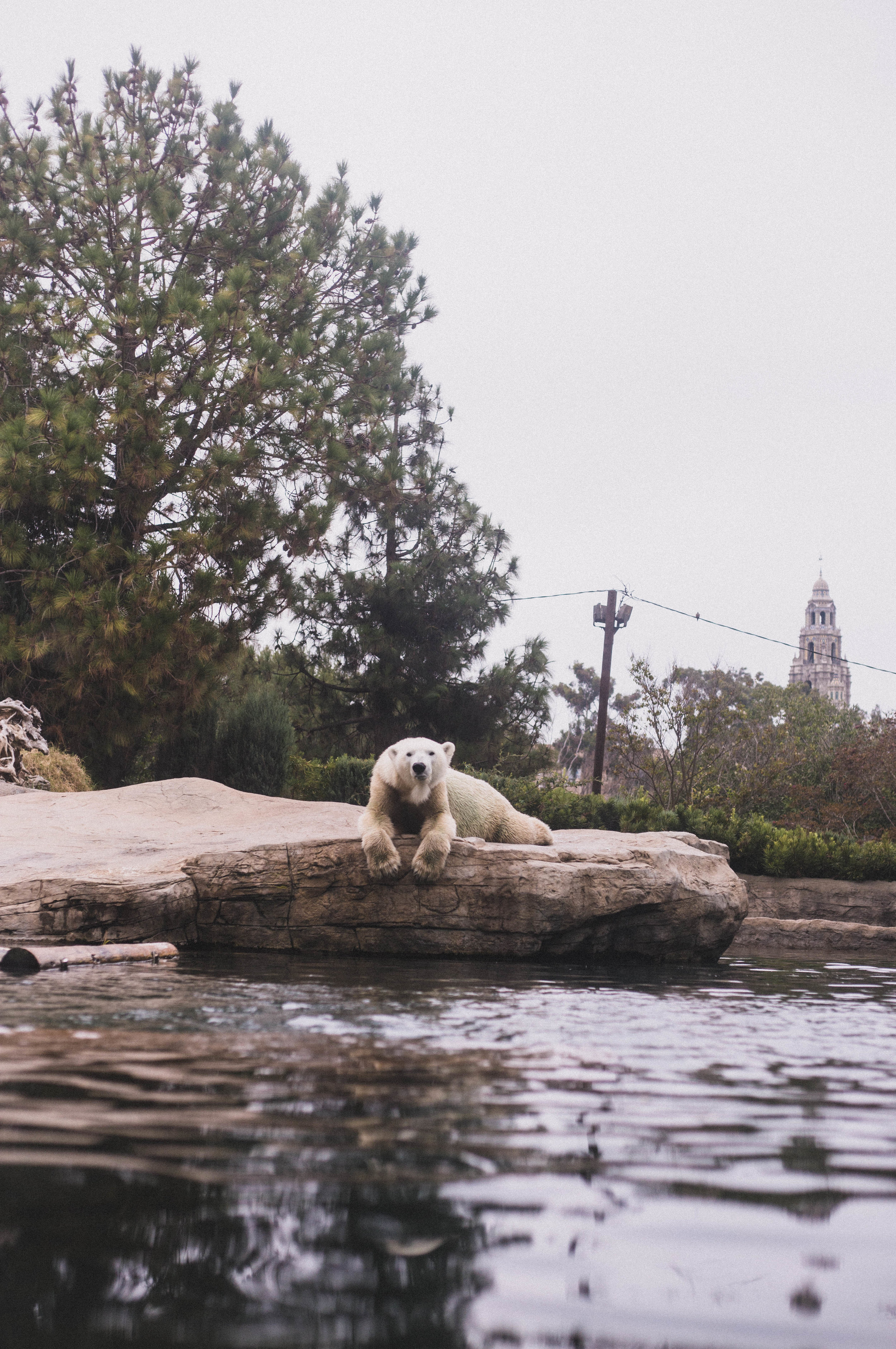 Polar Bear Exhibit at the San Diego Zoo (City Guide to San Diego)