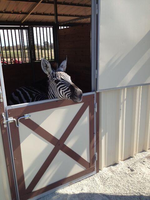 Zoe loves the new barn!